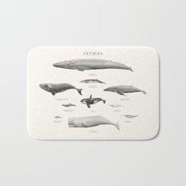 Cetacea Bath Mat