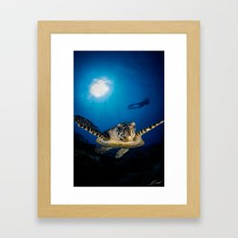 Hawksbill turtle and diver in Palau Framed Art Print