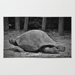 Tortoise Relaxing Rug