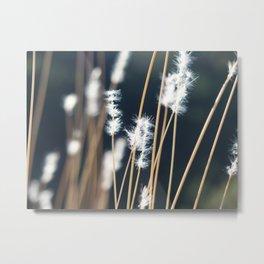 Flowers in the sunlight Metal Print