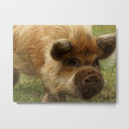March of the Ginger Pig Metal Print