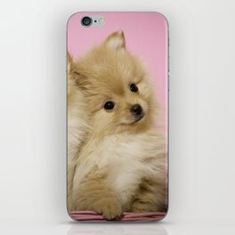 Pink Pomeranian Brothers iPhone Skin