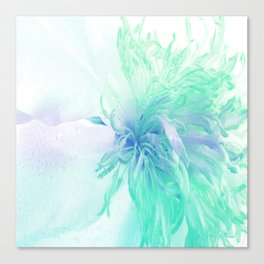 White Peony In A Different Light Canvas Print