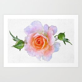 Pink Rose flower, oil on canvas Art Print