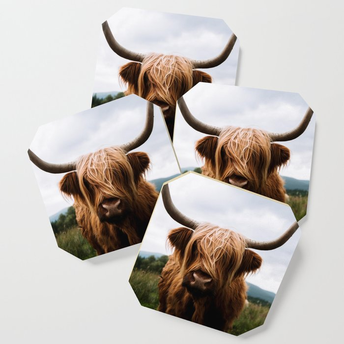 Scottish Highland Cattle in Scotland Portrait II Coaster