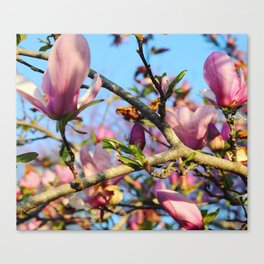 Bright Blooms Canvas Print