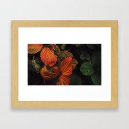 The Nature of Fire 1 Framed Art Print