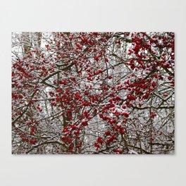 Hawthorn bush in winter Canvas Print