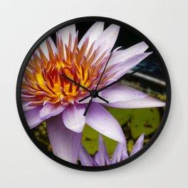 Nymphaea 'Rhonda Kay' III Wall Clock
