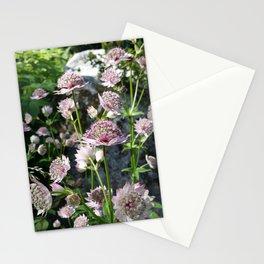 Astrantia major Stationery Cards