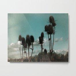 Prickly Teasels  Metal Print