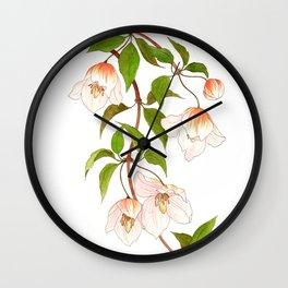 Clematis Cirrhosa Wall Clock