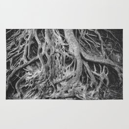 Roots of the Medusa Tree in Greenville, SC Rug