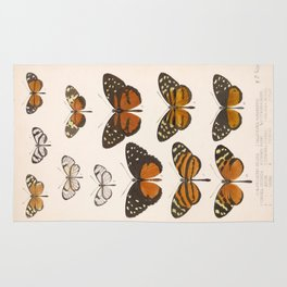 Vintage Scientific Anatomical Insect Butterfly Illustration Vintage Hand Drawn Art Rug