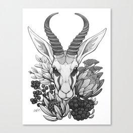 Springbok & Fynbos Canvas Print