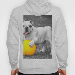 English bulldog white and the yellow ball Hoody
