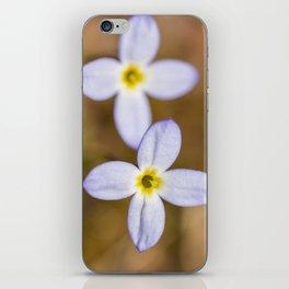 Spring Bluets iPhone Skin