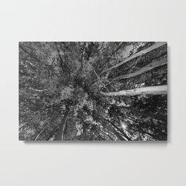 B&W Apens trees Metal Print