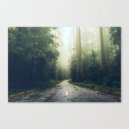 Redwood Forest Adventure - Nature Photography Canvas Print