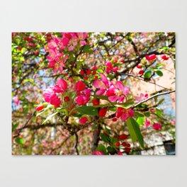 Pink Paradise Canvas Print