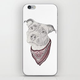 pitbull//dog iPhone Skin
