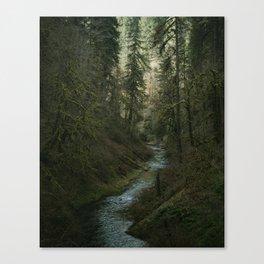 Oregon Forest V Canvas Print
