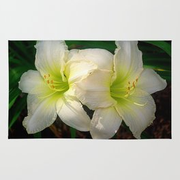Glowing white daylily flowers - Hemerocallis Indy Seductress Rug