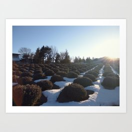 Lavender at Lake Kawagoe Art Print