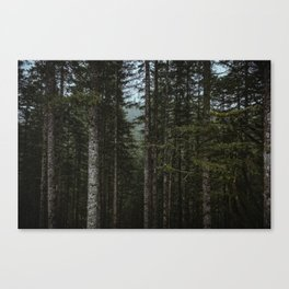 Oregon Trees Canvas Print