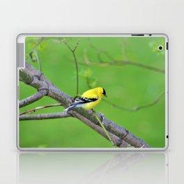 Yellow Finch Laptop & iPad Skin