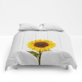 Sunflower Still Life Comforters