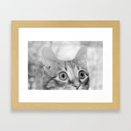 What's New KittyCat Framed Art Print