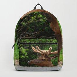Wapiti At The Roadsite Backpack