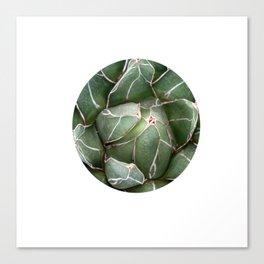 Cactus Succulent Plant art Modern art Scandinavian circle Canvas Print