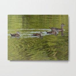 Wood duck family Metal Print