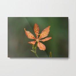 Leopard Lily in Bloom Metal Print