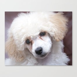 The Innocence of a Puppy Canvas Print