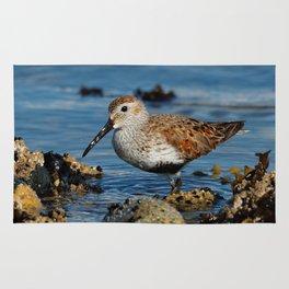 Bird on the Beach / A Solitary Dunlin Rug