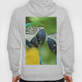 Blue-and-yellow Macaw Hoody