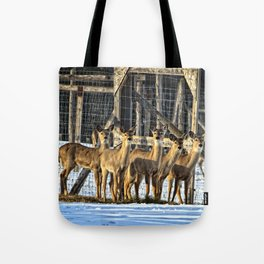 Whitetail Deer Stare Down Tote Bag