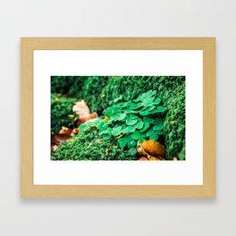 Bunch of Clovers Framed Art Print