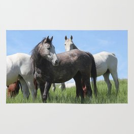 Thoroughbred Arab Cross Photography Print Rug