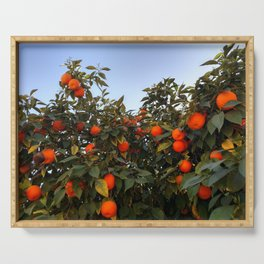 Orange Grove in Phoenix Serving Tray