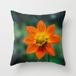 Morning dew and midday stroll Throw Pillow