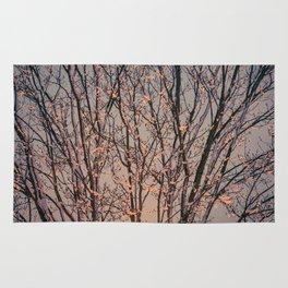 Winter Tree at Sunset Rug