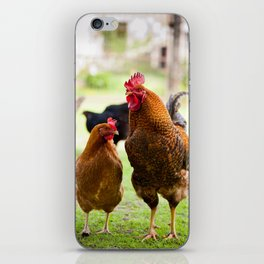 young Rhode Island Red chickens iPhone Skin