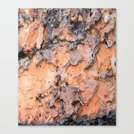Fallen Bark rustic decor Canvas Print