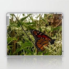 Feeding butterfly Laptop & iPad Skin