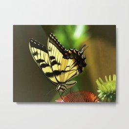 Tiger Swallowtail Butterfly #5 Metal Print