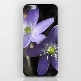 Woodland hepatica, Anemone acutiloba - a sure sign of spring iPhone Skin
